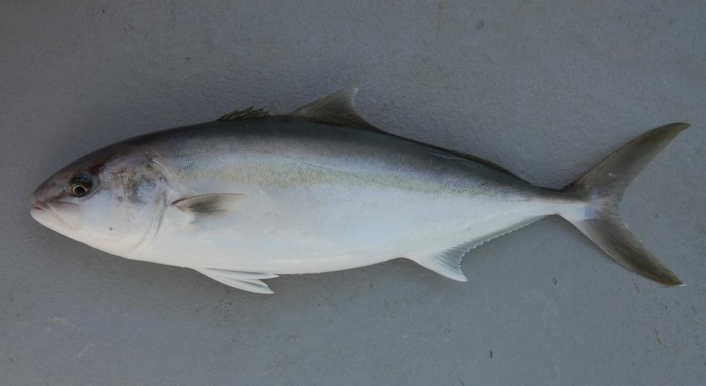 fish4446